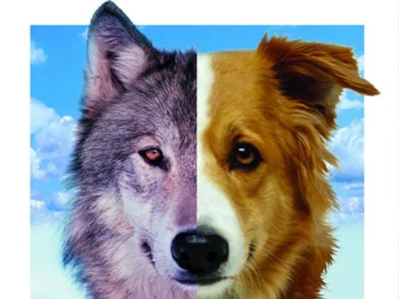 cachorro ou lobo