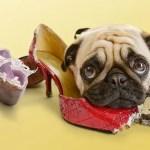 problemas de comportamento cães cachorro ethos animal helena truksa
