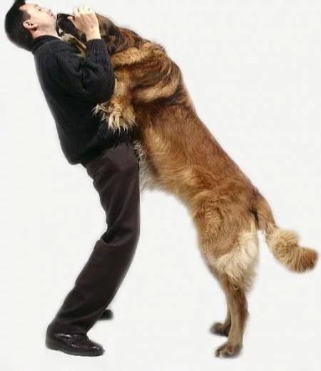 pular-nas-pessoas-cães-ethos-animal-comportamento-animal
