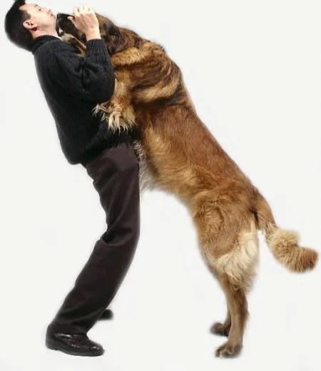 pular nas pessoas cães ethos animal comportamento animal