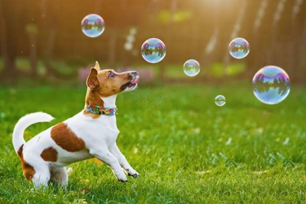 importancia de brincar com seu cão ethos animal comportamento bem-estar