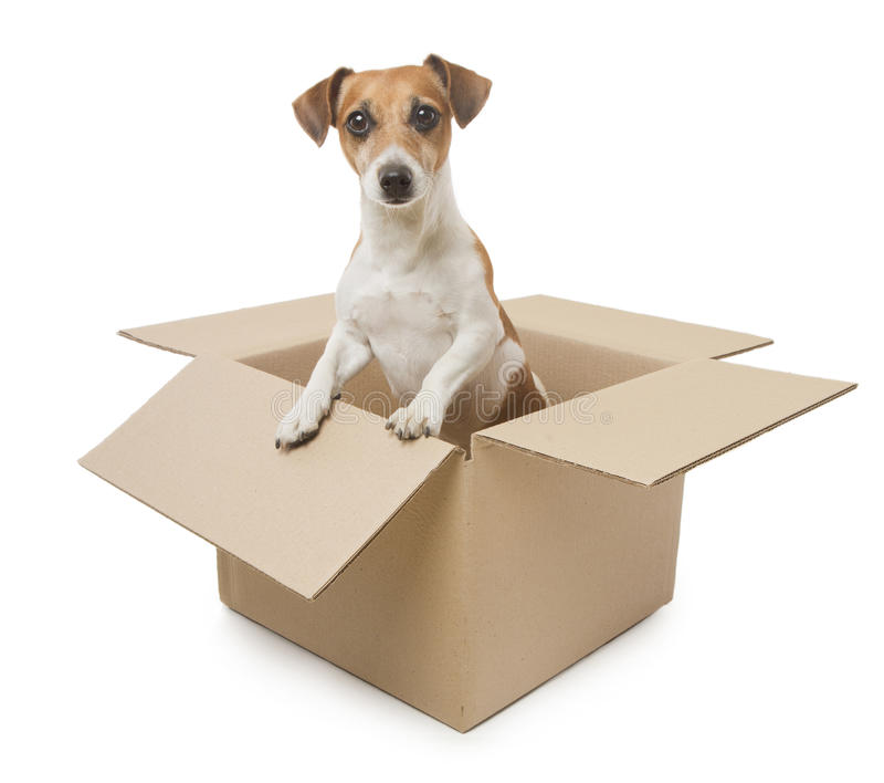 curso de adestramento de cães profissional formação de treinadores ethos animal