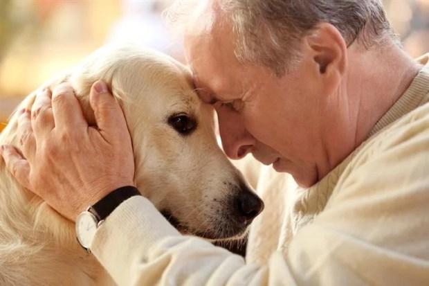 luto pela perda morte de um animal de estimação ethos animal