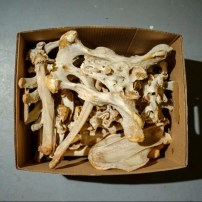 O esqueleto de um urso preto faz parte da coleção do laboratório, que os cientistas usam para ajudar a identificar as espécies de novas vítimas ou evidências.