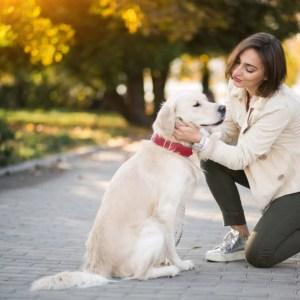 Cães e Humanos Benefícios da coevolução