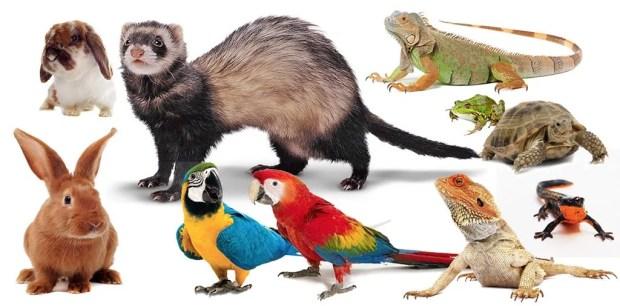pet sitter para animais silvestres e exoticos biologa helena truksa ethos animal