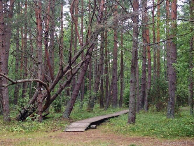 Latvija. Pape - laukinės gamtos išsiilgusiems