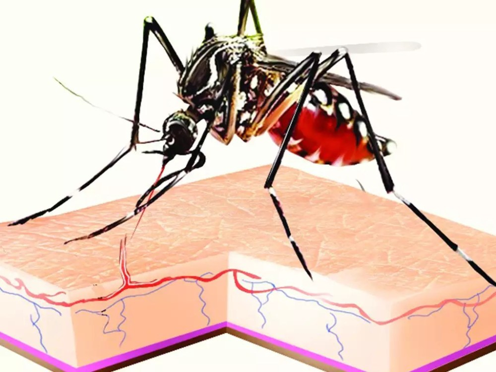 medium resolution of us agency advises pregnant women not to visit rajasthan amid zika outbreak