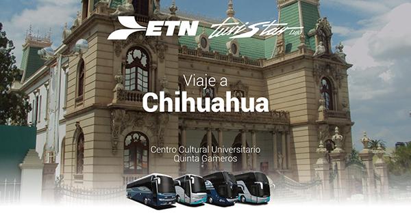 "Chihuahua ""Un clásico tesoro"""
