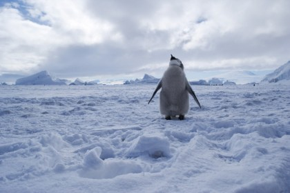 Long-awaited reserve created in Antarctica's Ross Sea