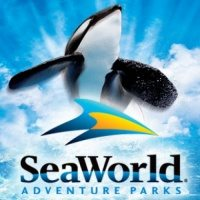 SeaWorld announces new Chief Marketing Officer