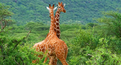 Going green and staying green: Kenya Tourism
