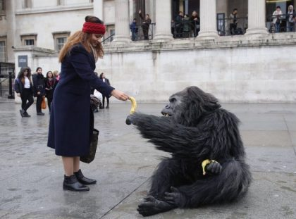 Animatronic mountain gorilla on Trafalgar Square sets social media abuzz