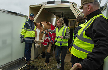 Europe's finest horses travel in comfort on board Qatar Airways Boeing 777