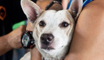 Bali: Just say no-no to dog meat