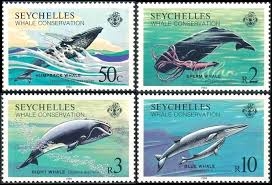 Giant Humpback Whales Migrations through Seychelles