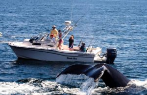 Whale-watching tour operators from Latin America demand protection of whales