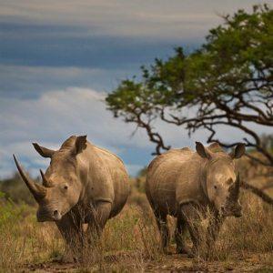 Qatar Airways joins USAID ROUTES Partnership to combat wildlife trafficking