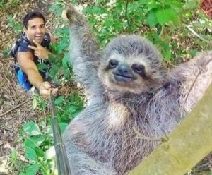 Iconic wild animals suffering for tourist selfies