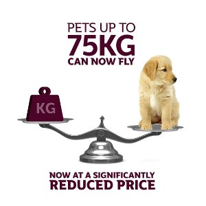 Qatar Airways reduces prices and doubles weight allowance for transporting domestic pets