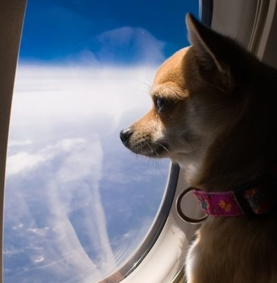 IATA launches new program to improve safety of animals traveling by air