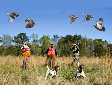 5 best places for quail hunting in the U.S.