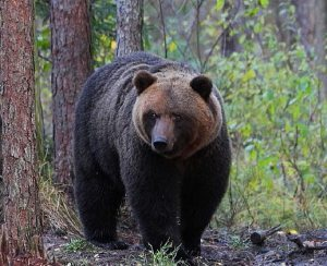 Visit Estonia releases 'Top 5 Tips' for bear-watching