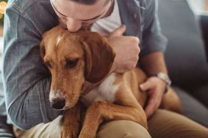 CertaPet supports Southwest Airlines' new Emotional Support Animals policy