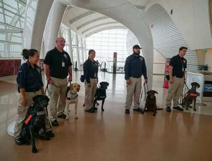 TSA highlights role working canines play in security operations at SJC