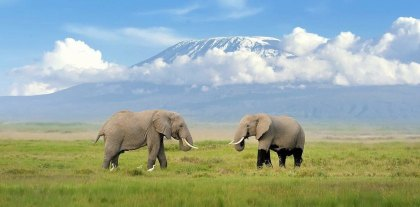 World unites to fight against cable car on Mount Kilimanjaro