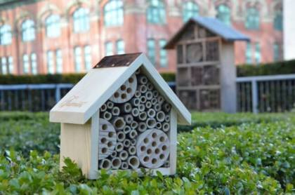 Fairmont Hotels: Honeybees and responsible tourism