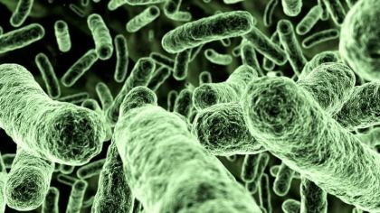 Flesh-eating Baltic Sea bacteria kills beachgoer in Germany