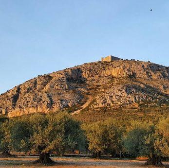 foto oliveres sota Montgrí