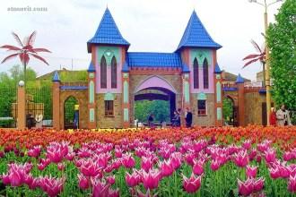 Квітковий тур у Кропивницький