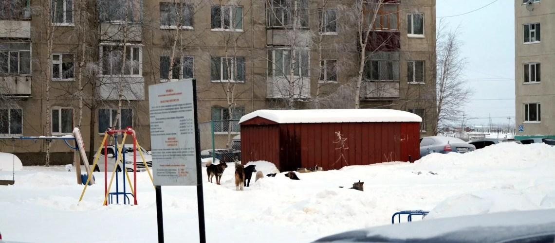 Югорские депутаты разрешили местным администрациям самим отлавливать бездомных животных