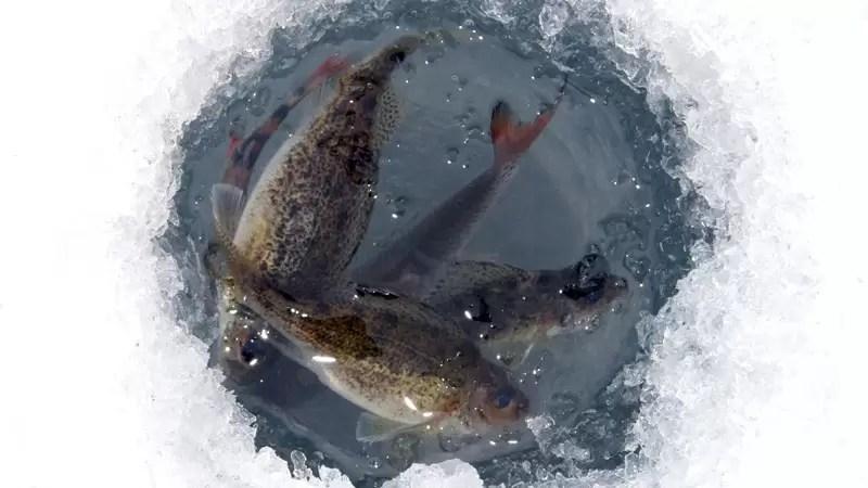 В Югре на водоемах региона пройдет акция «Помоги рыбе»