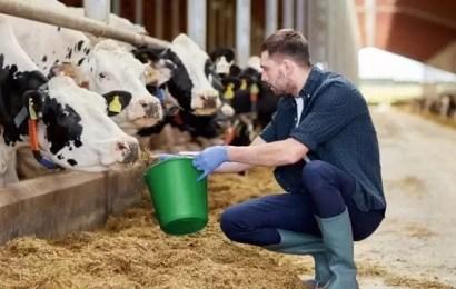 Какие требования выдвигают к югорским фермерам крупнейшие сетевые супермаркеты