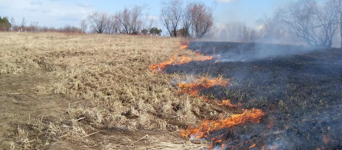 С начала пожароопасного сезона в Югре зарегистрировано 66 пожаров