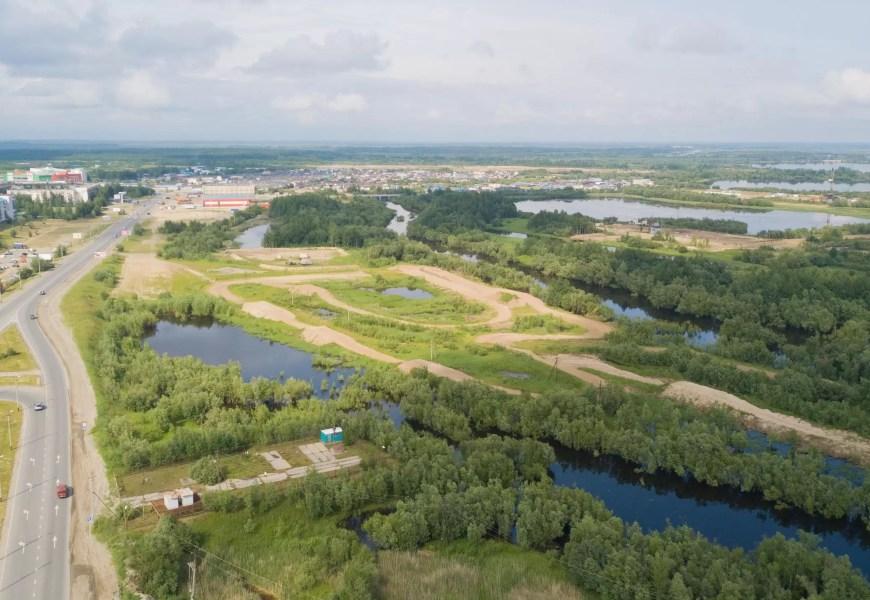 Около 100 га лесов будет восстановлено в Югре к 2025 году