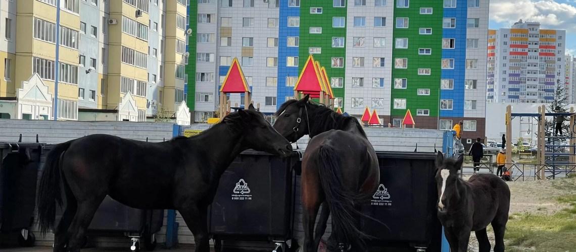 Нефтеюганцы переживают за судьбу беспризорных лошадей