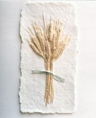 Wheat_Stalk