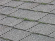 Moss growing at the roof