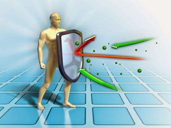 Какую функцию выполняют надпочечники в организме человека? Надпочечники и гормоны
