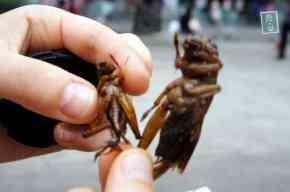 Thai worms