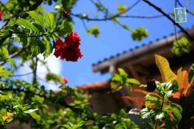 Beautiful flowers, Galle