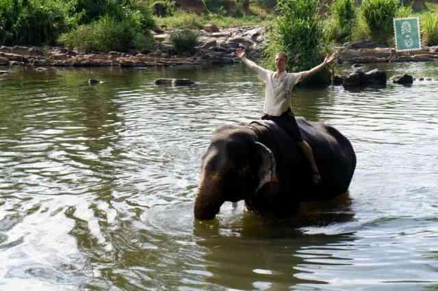 Król dżungli :)