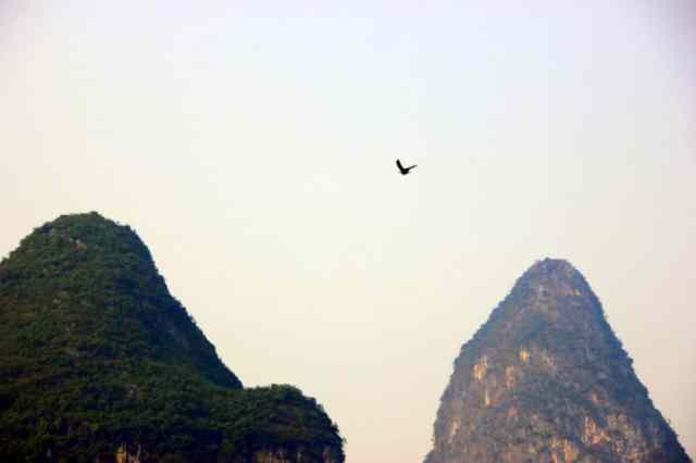 Birds flying high above the mountains, Yangshuo river