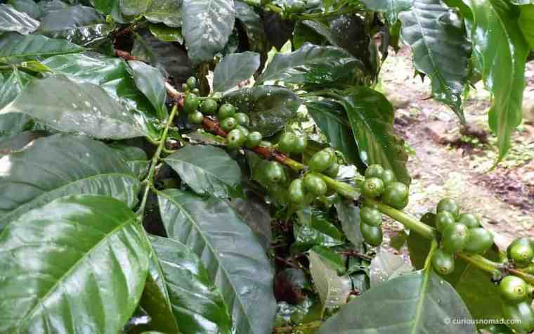 cafe-verde-curious-nomad