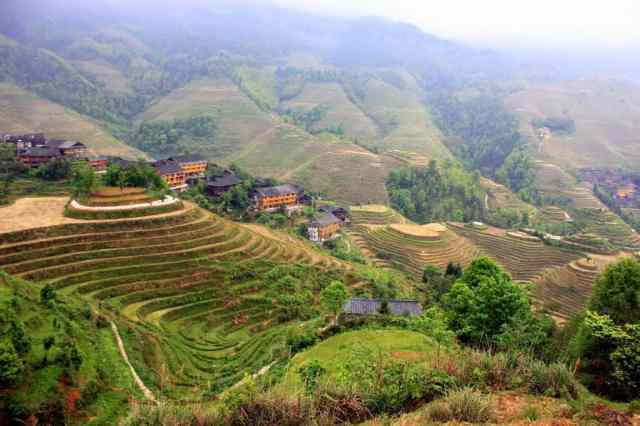 Longji Terraced Fields (5)
