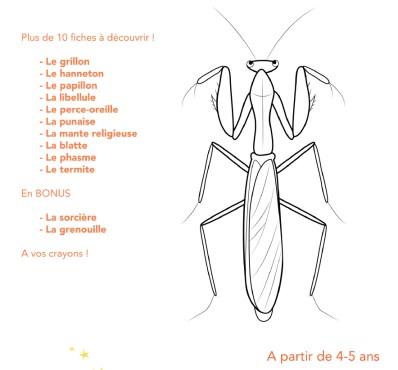 descriptif fiches insectes